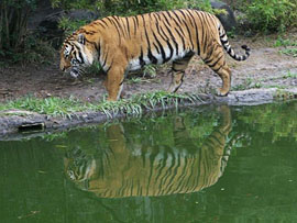Sunderban Tiger Camp, Sunderbans